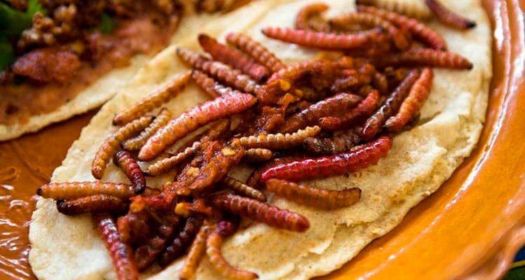 Receta de tacos de gusanos de maguey