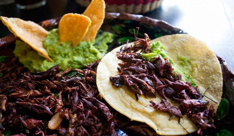 receta de chapulines fritos al estilo mexicano