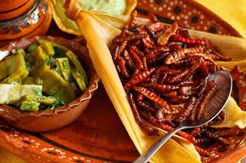 receta-de-gusanos-cuchama-con-nopales